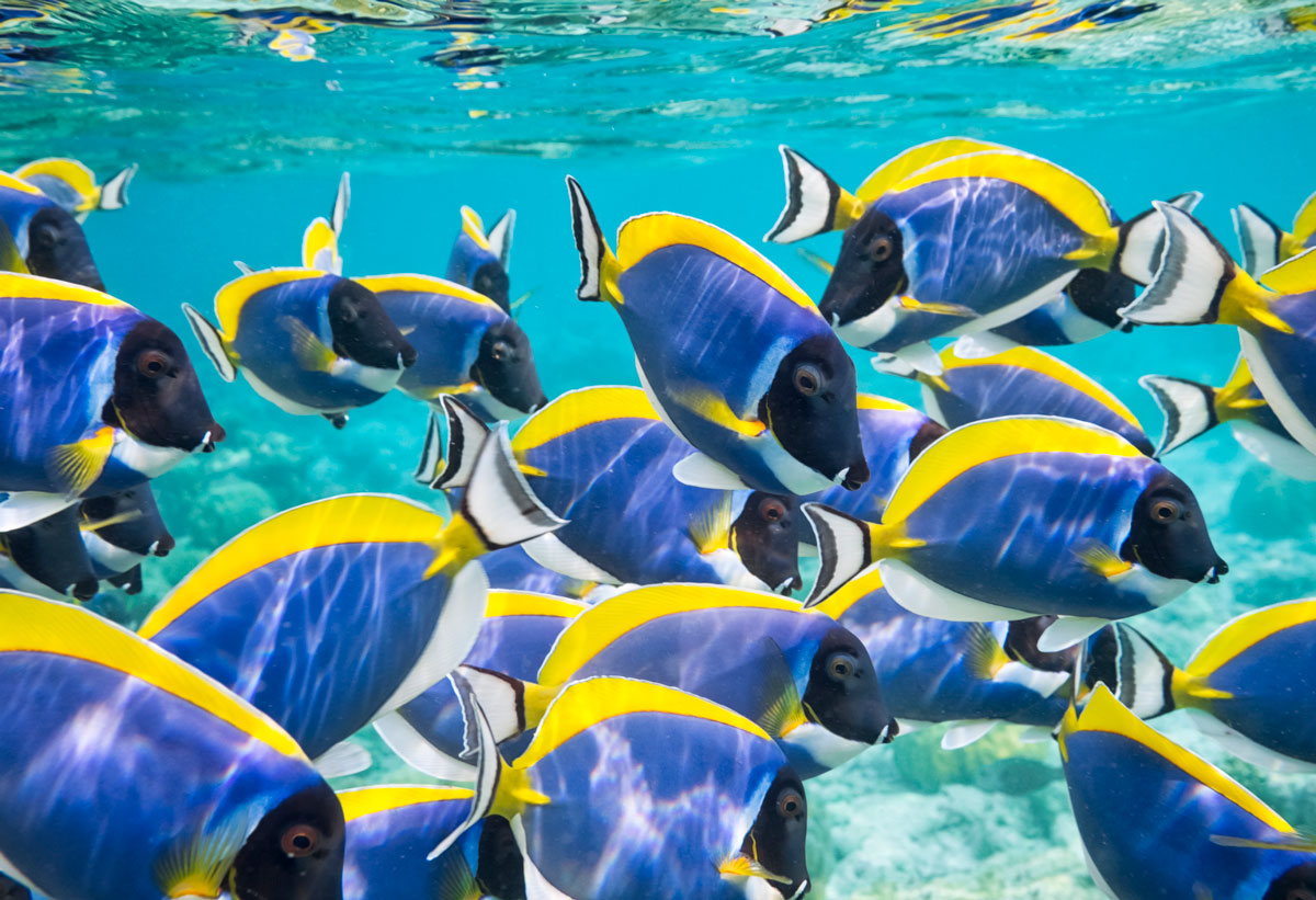 The stars of the show the fishes scuba diving news - Dive training magazine ...