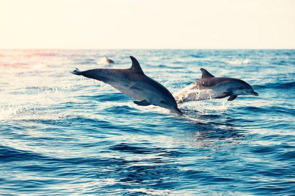 marine mammals - dolphins
