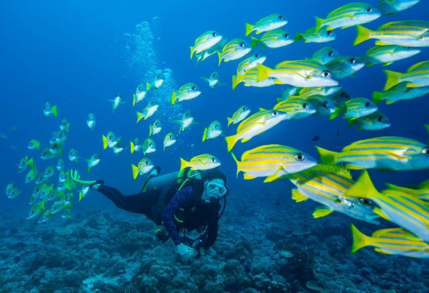 scuba diving with school of fish