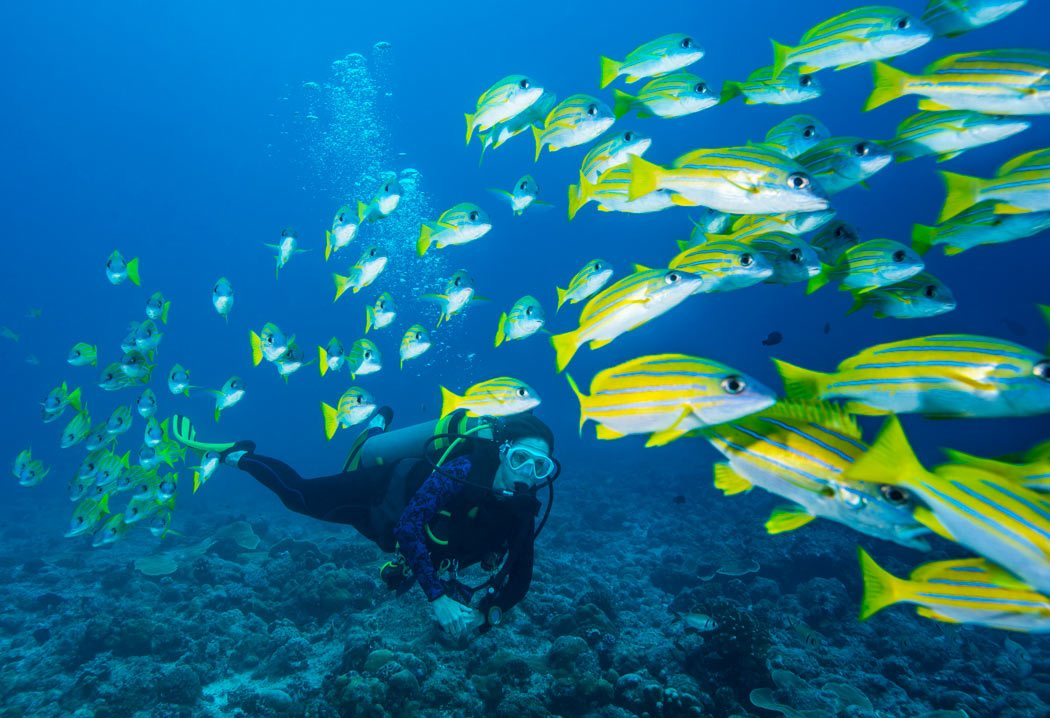 Scuba q a common questions asked by nondivers scuba diving news gear education dive - Dive in scuba ...