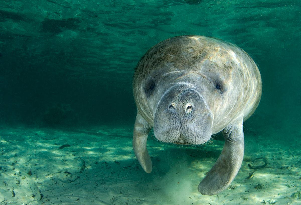 группа фото исчезающих животных морских еще