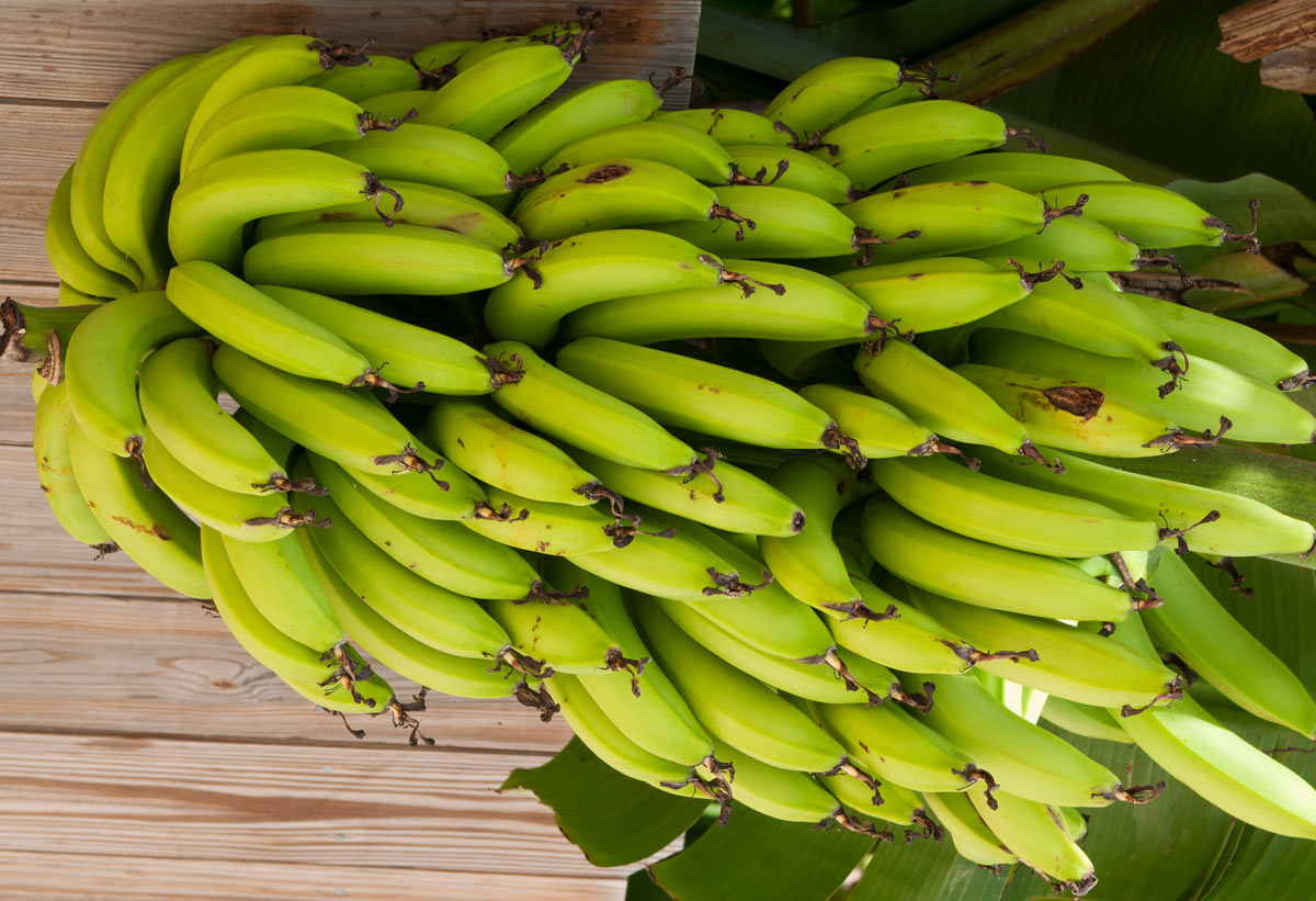 The Worlds Bananas Are Clones—and They Are in Imminent Danger