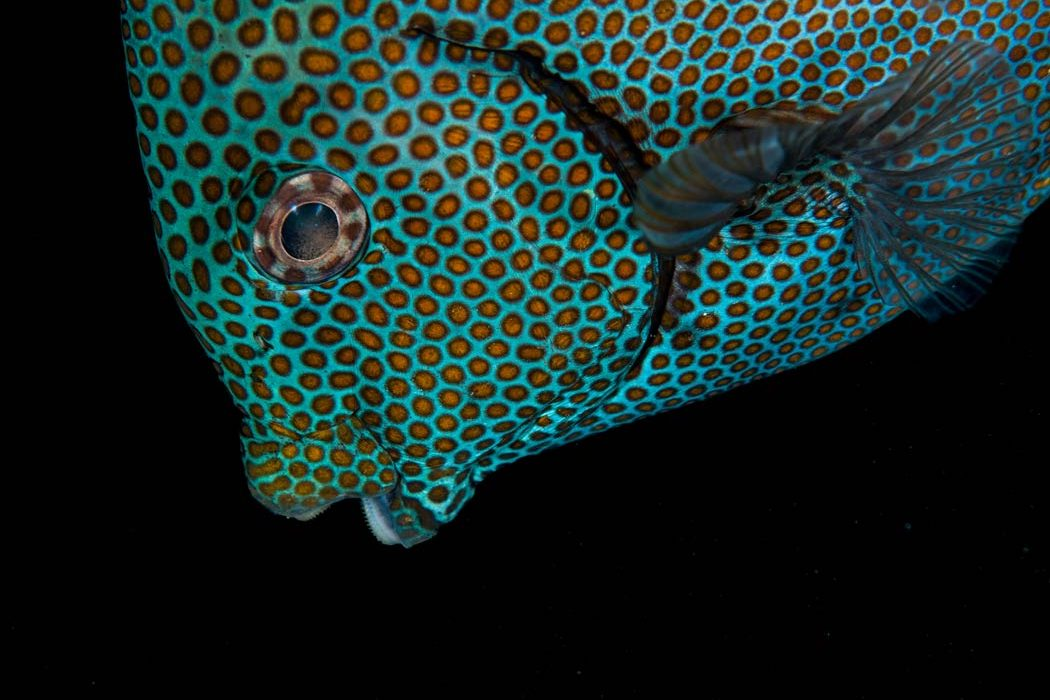Why are reef fish so colorful the science behind the for Photos of fish