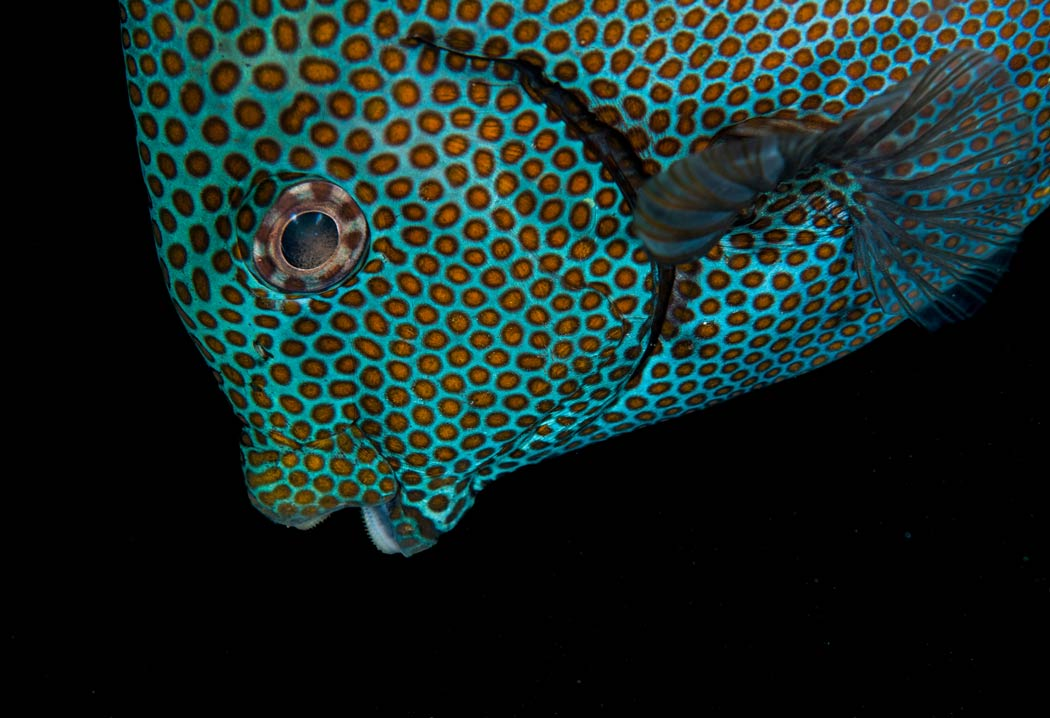 Why Are Reef Fish so Colorful? The Science Behind the Beauty | Scuba Diving  - News, Gear, Education | Dive Training Magazine
