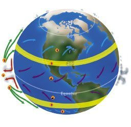 Figure 1: Simplified global wind patterns  1. Air rises in the tropics. (red arrows) 2. Air flows toward the poles and sinks. (green arrows) 3. Descending air creates mostly clear skies, light winds in Horse Latitudes. (the yellow belts around the globe) 4. Some of the descending air flows back toward the equator as the trade winds. (purple arrows) 5. Some of the descending air becomes the mid-latitude westerlies. (blue arrows)