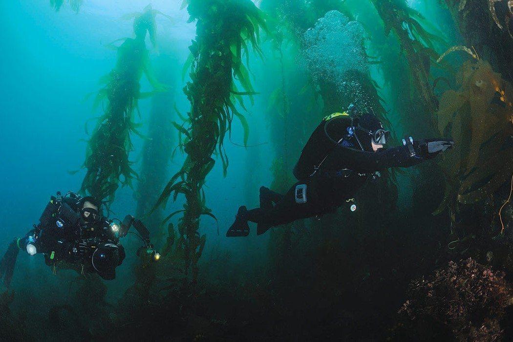 Kelp Diving: Photo by Joseph C. Dovala