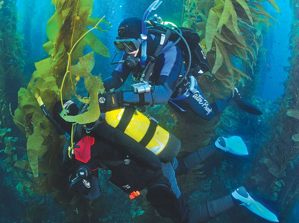 Kelp Diving: Photo by Joseph C. Dovala