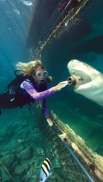 Animal Encounters Curaçao
