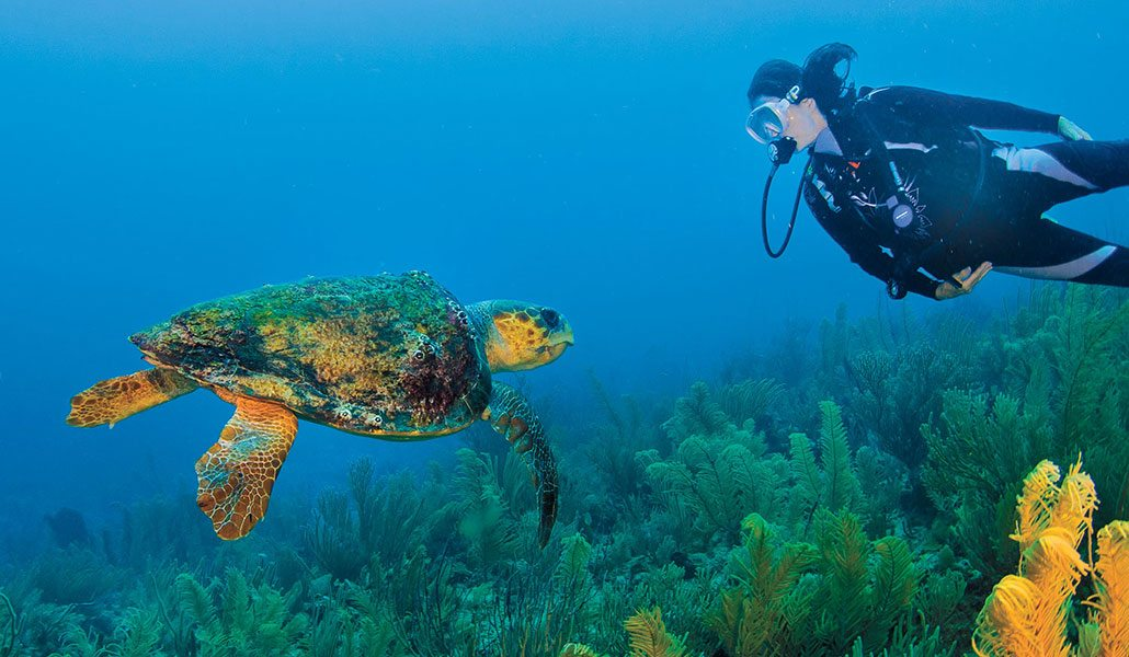 Belize sea turtle and a diver