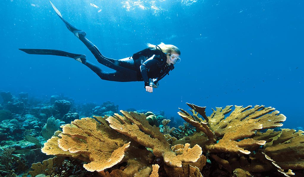 Scuba Diving | Curaçao reef
