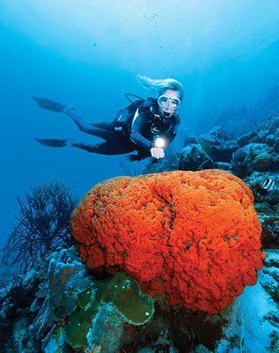 Curaçao reef
