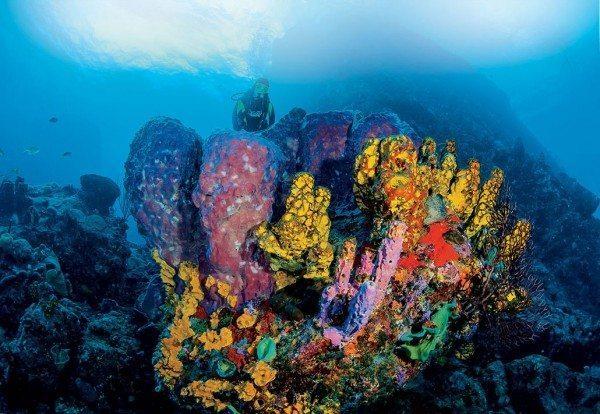 Saba reef