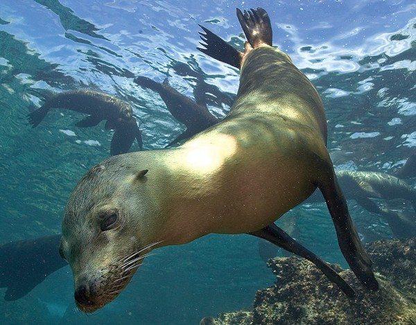 Scuba Diving | Seal