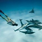 Scuba Diving | Snorkeler and dolphins