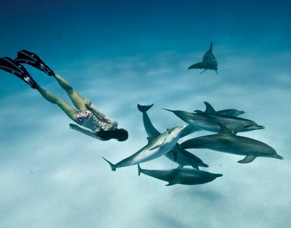Snorkeler and dolphins