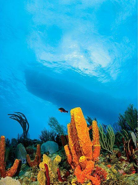 St. Kitts diving