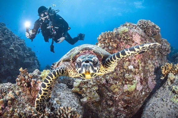 Scuba Diving   Hawaii SeaTurtle and Diver