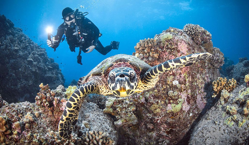 Scuba Diving | Hawaii SeaTurtle and Diver