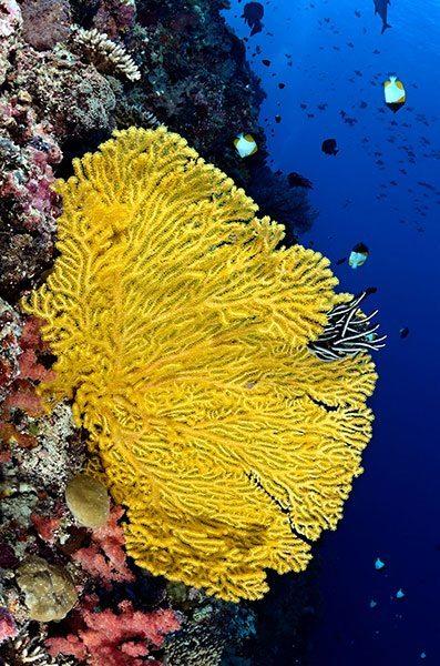 Palau Reef