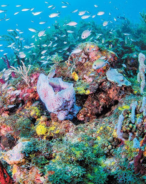 Grenada coral reef