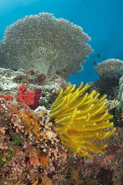 Indo-Pacific Reef Scene