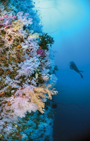 Diver at a Fiji coral reef