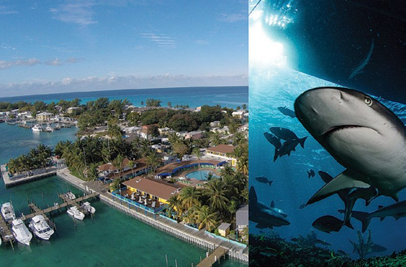 Neal Watson's Bimini Scuba Center Bahamas