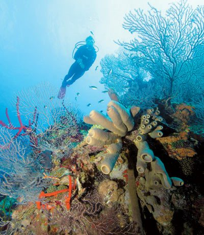 Grand Cayman Reef