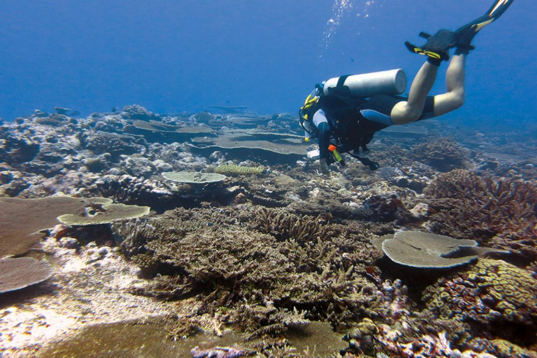 Diving In American Samoa Scuba Diving News Gear Education Dive