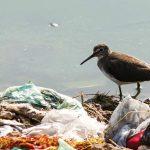 Bird in pollution