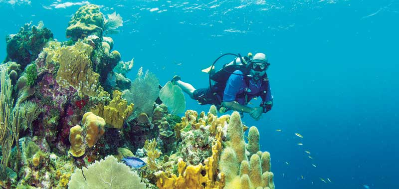 Scuba diver in Guanaja