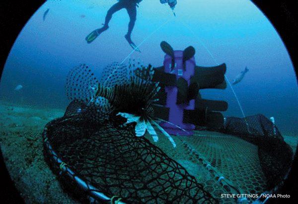 Dive training author at scuba diving news gear - Dive training magazine ...