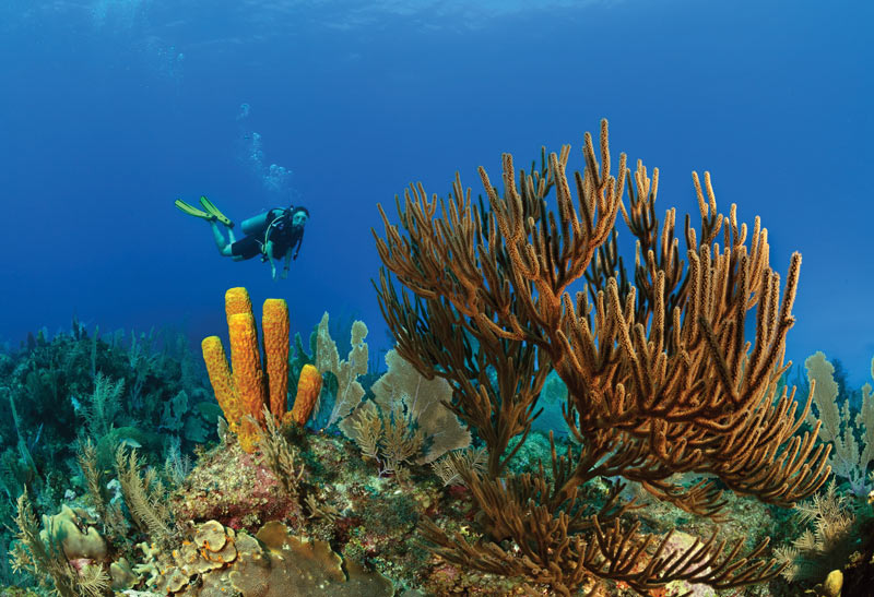 Cayman Brac scuba diver reef