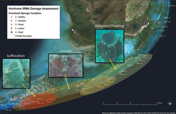 Florida Keys reef damage assessment