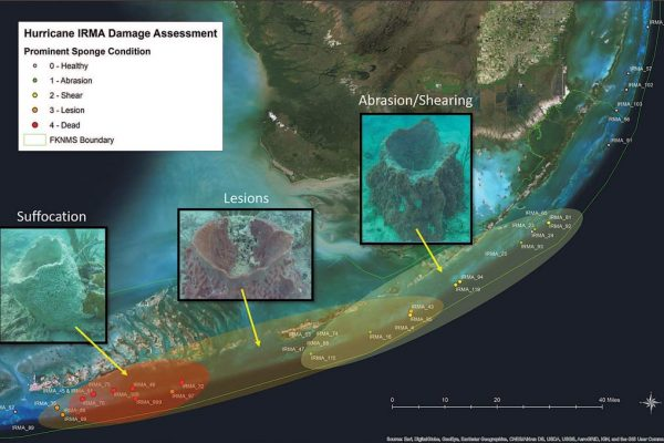 Florida Keys reef damage assessment