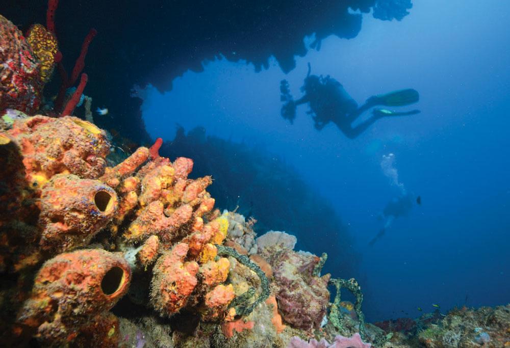 scuba diving in Dominica