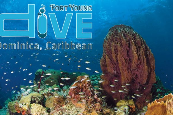 Fort Young Hotel Dive Dominica