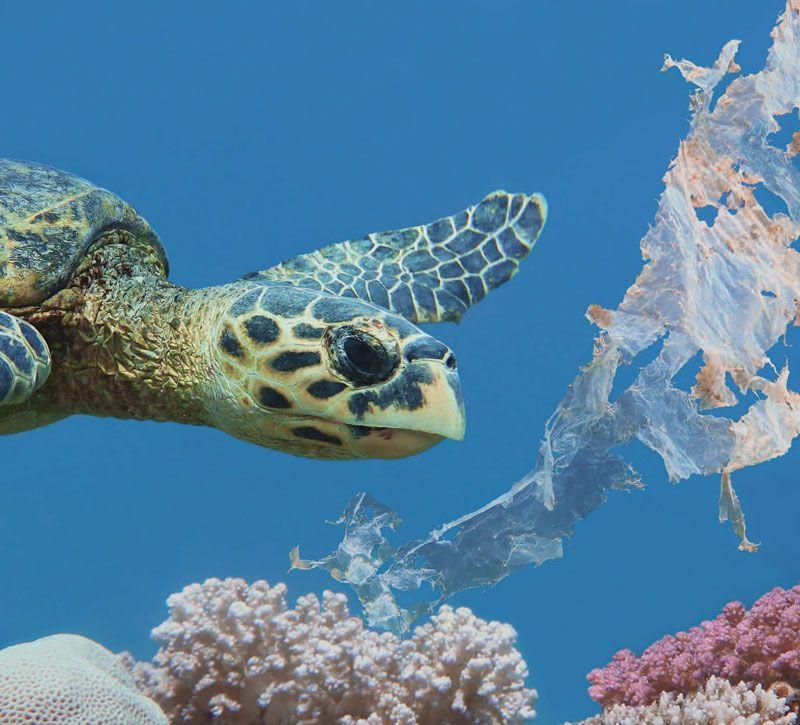 Turtle and trash