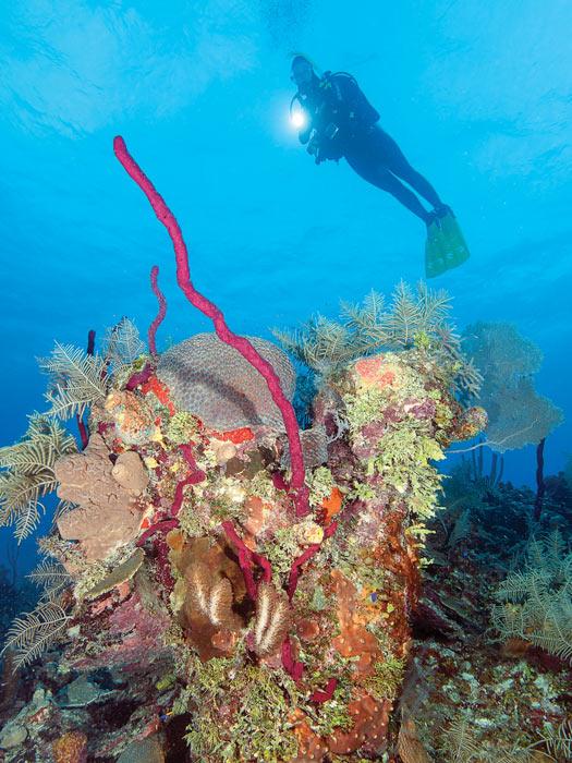 coral reef Cuba