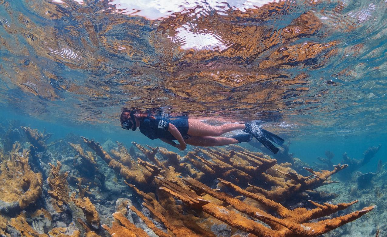 snorkeling on reef
