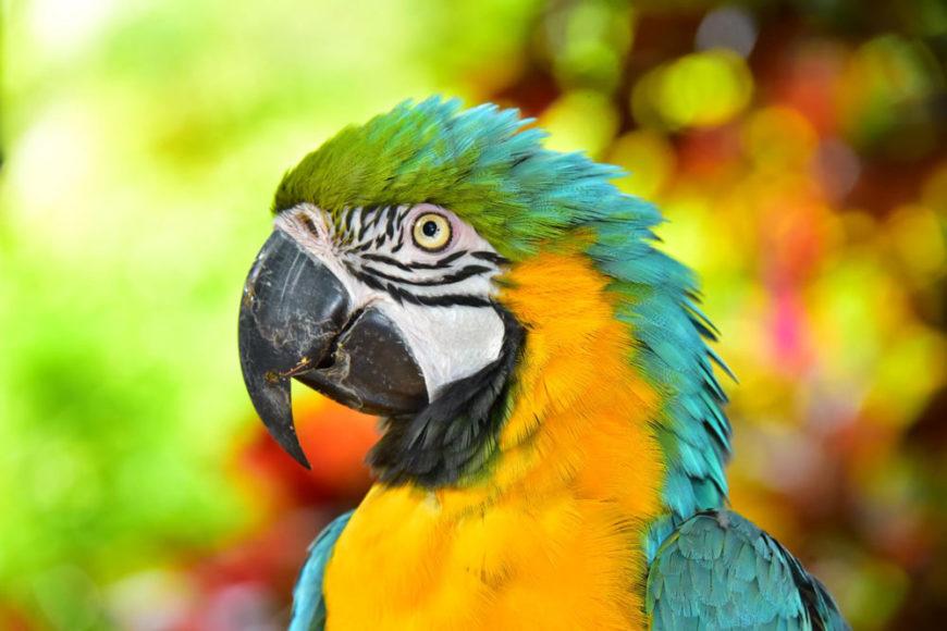 Parrot - Anthony's Key Resort