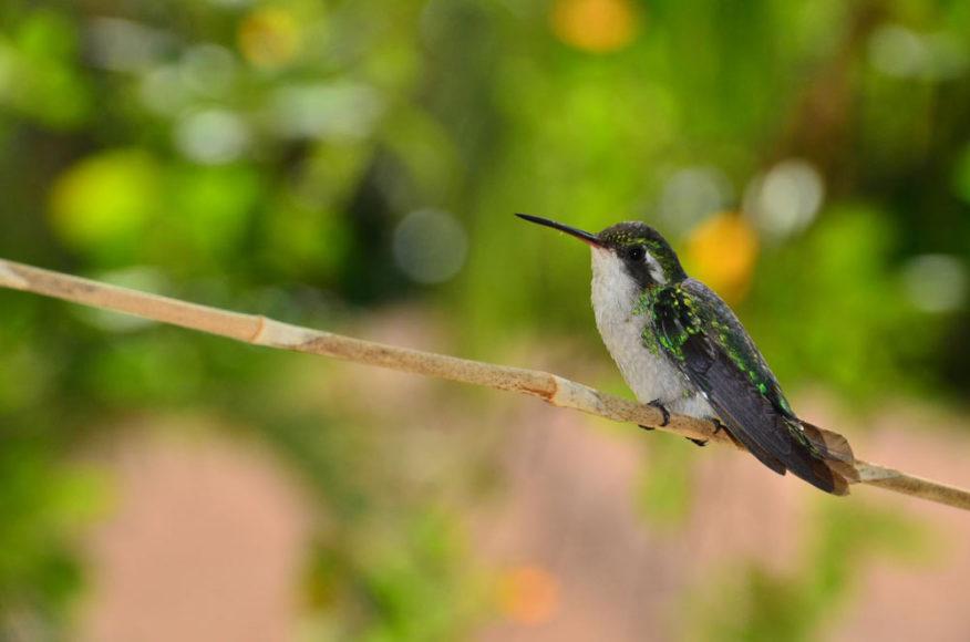 Bird - Anthony's Key Resort