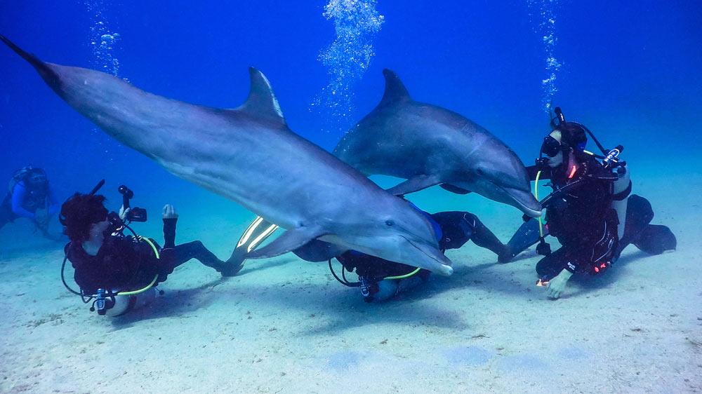 Dolphin Dive - Anthony's Key Resort