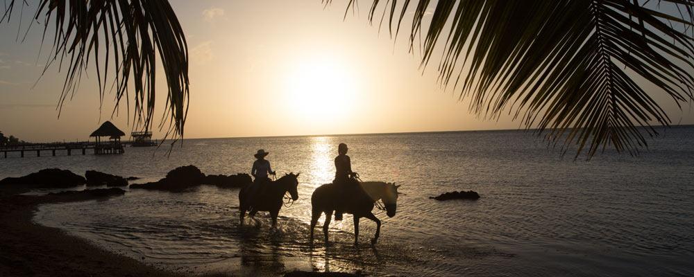 Horses - Anthony's Key Resort