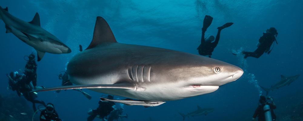 Shark - Anthony's Key Resort