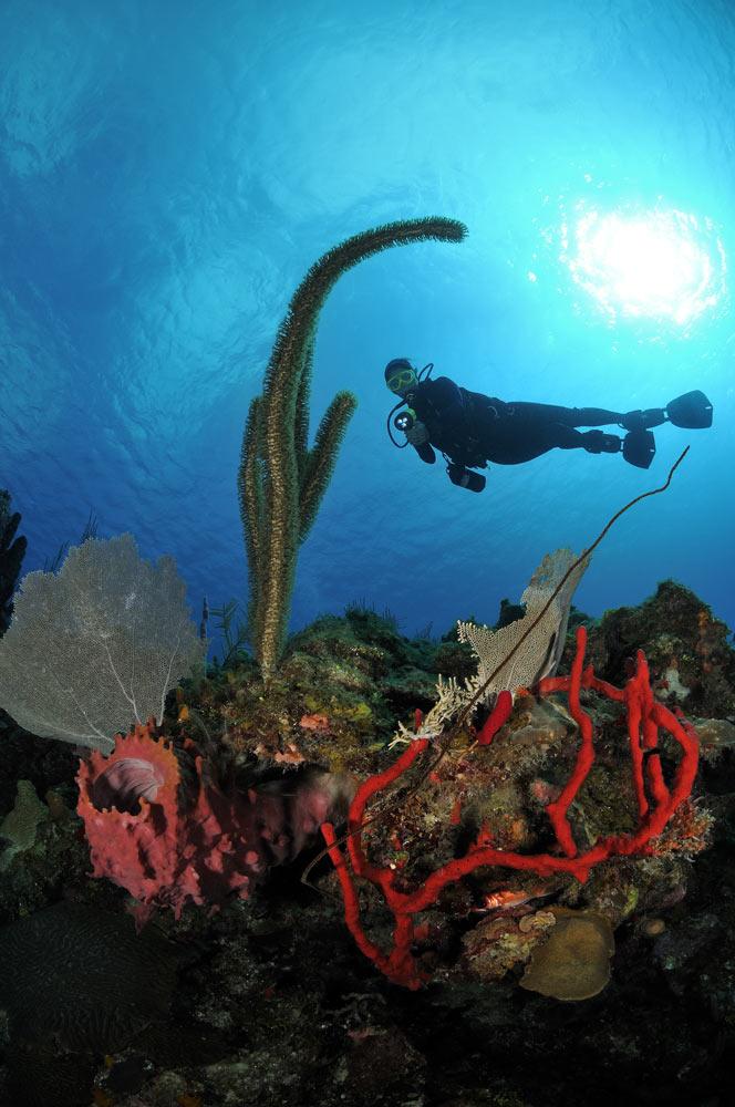 scuba diving Utila