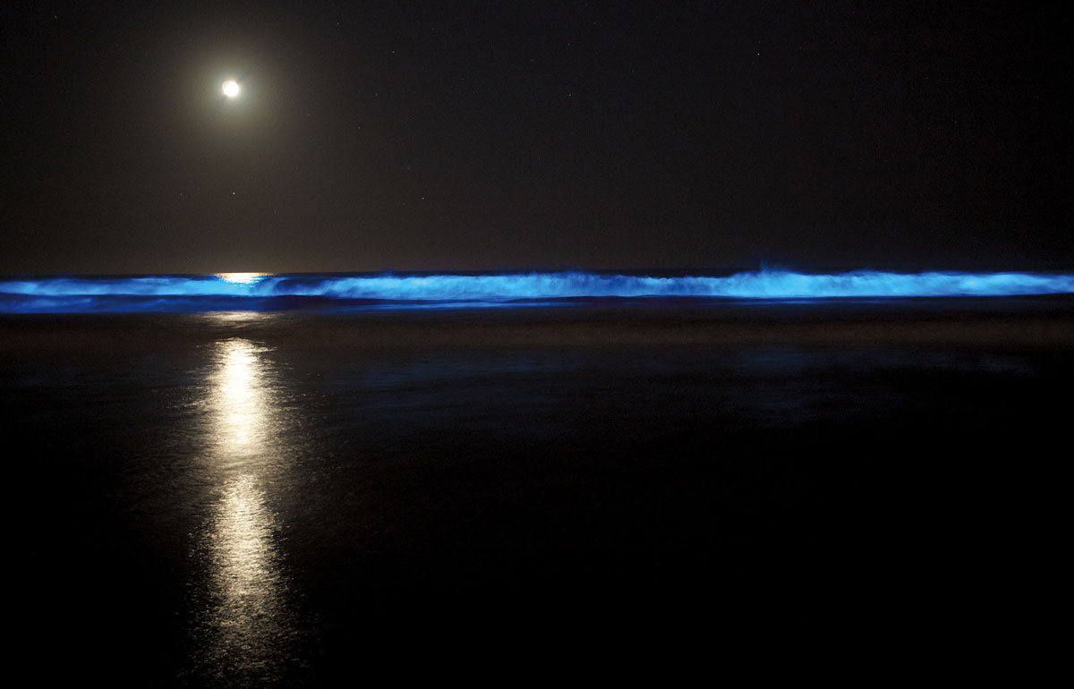 bioluminescence in the ocean